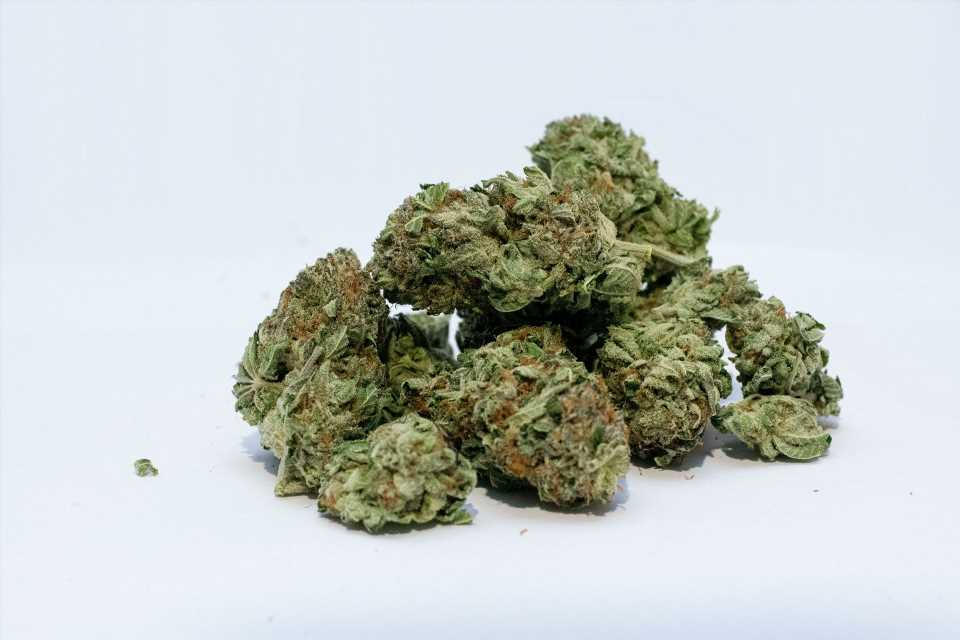 Preclinical study links human gene variant to THC reward in adolescent females