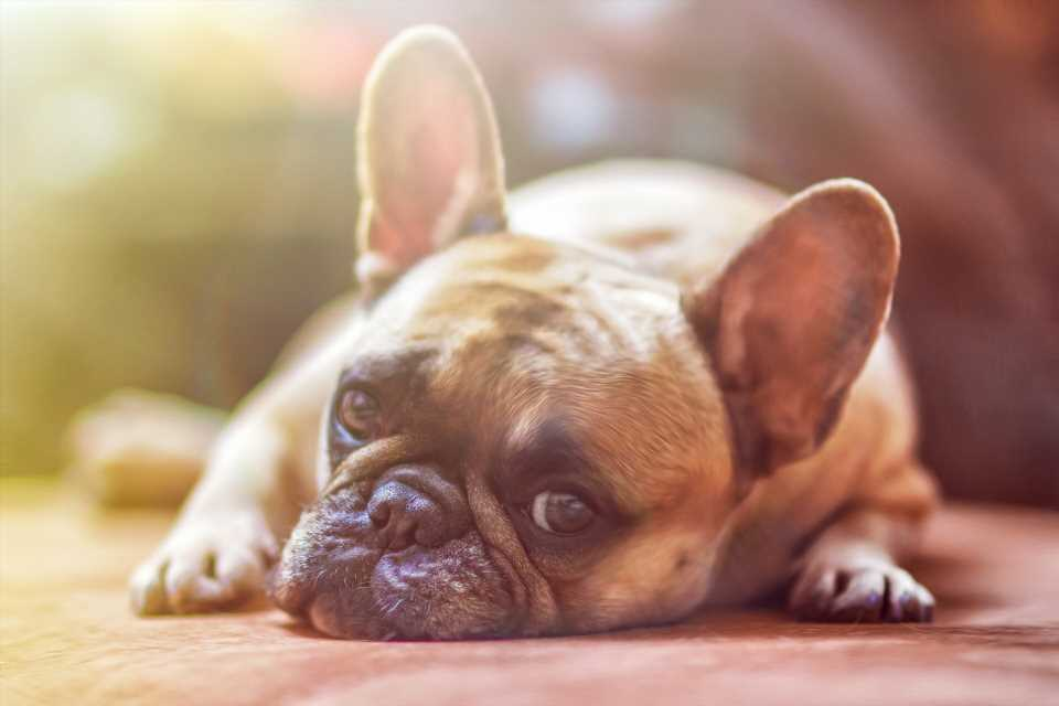 Good news: No evidence dogs and cats can get coronavirus
