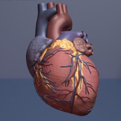 Blood platelets trigger events that cause organ damage after heart surgery