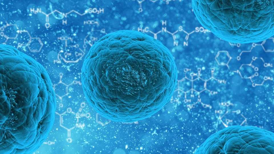 Old human cells rejuvenated with stem cell technology, research finds