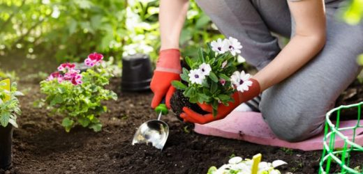 Gardening improves physical self-image – Naturopathy naturopathy specialist portal