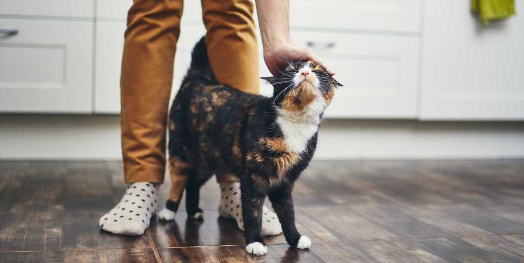 Yes, You Could Give Novel Coronavirus To Your Pet—But It's Not As Bad As It Sounds