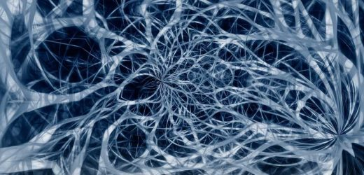 Neural circuits mapped: Now we understand vision better