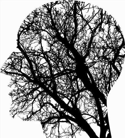 Family environment affects adolescent brain development