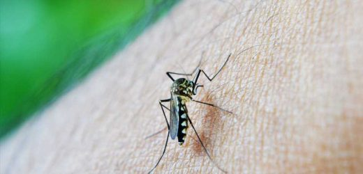 Malaria vaccine: Could this 'ingredient' be the secret to success?