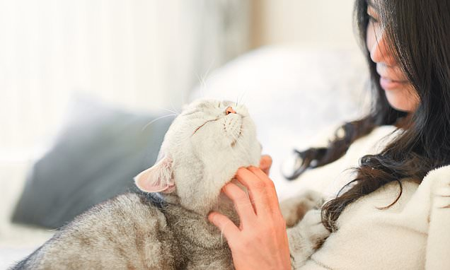 Cuddling your pet dog or cat could give you coronavirus