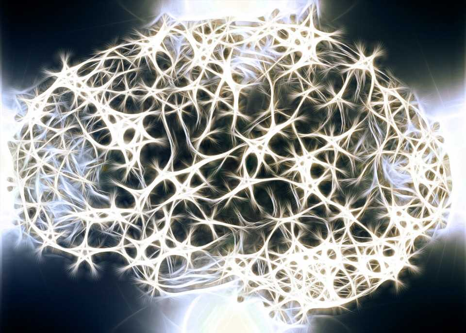 Discovery of new step in how brain cells work could lead to new therapies for epilepsy