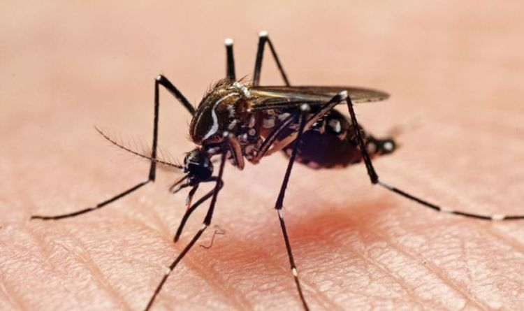 Dengue fever: Is there a cure for dengue fever?