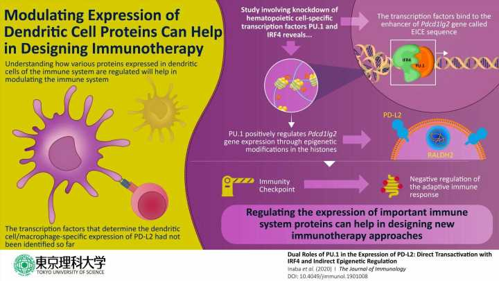 How the regulator is regulated: Insight into immune-related protein holds therapeutic value