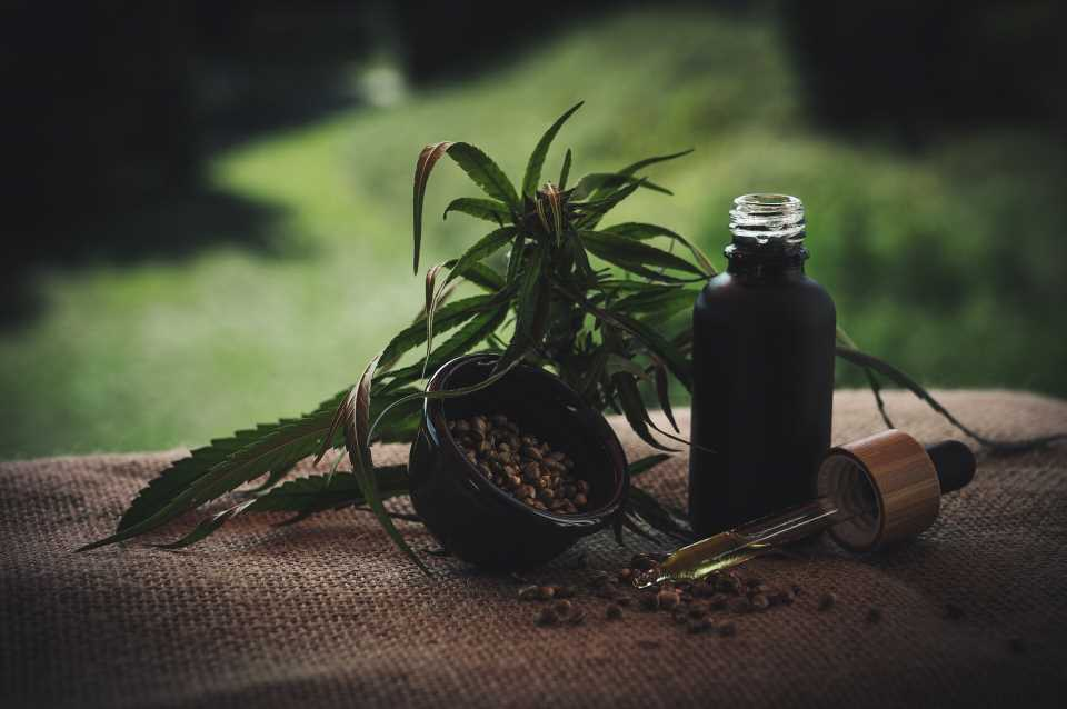 Researchers reveal how THC may treat acute respiratory distress syndrome