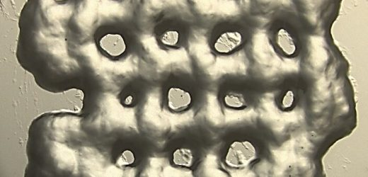 New 3-D printed hydrogels for T-cell growth for cancer immunotherapy