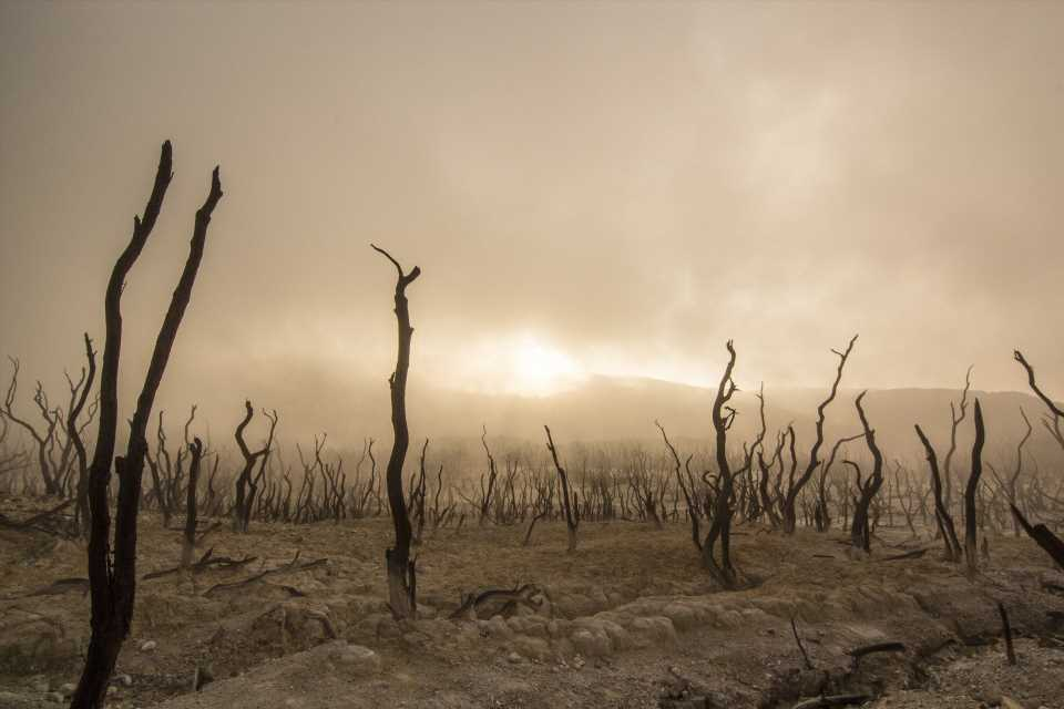 There's actually a word for the climate change-induced despair you've been feeling