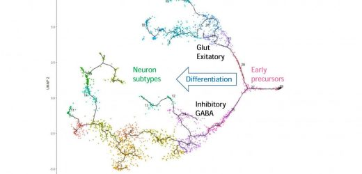 Brainstem neurons control both behaviour and misbehaviour