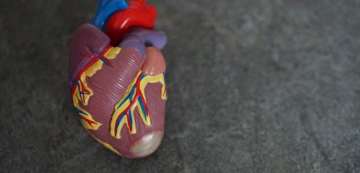 3-D bioprinted heart provides new tool for surgeons