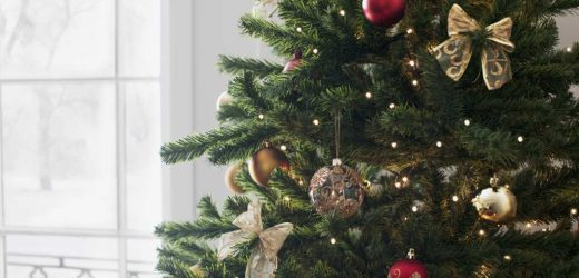 Are you allergic to your Christmas tree?