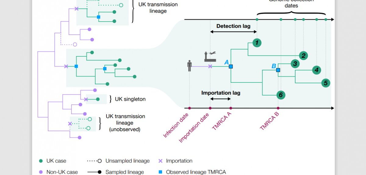 COVID-19 transmission chains in the UK accurately traced using genomic epidemiology