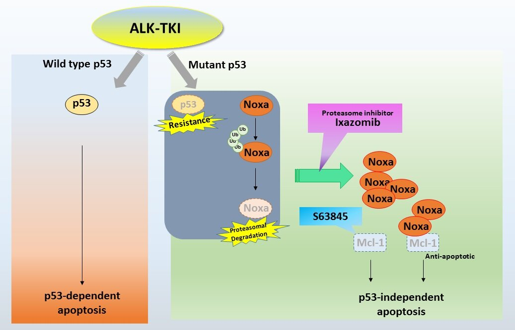 Potential combined drug therapy for lung cancer
