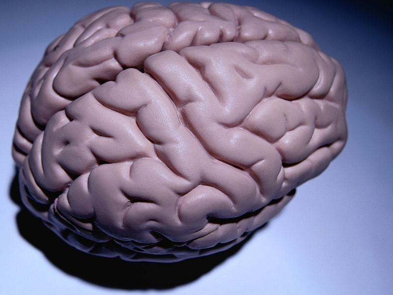 Autopsy study may explain why some COVID survivors have 'brain fog'