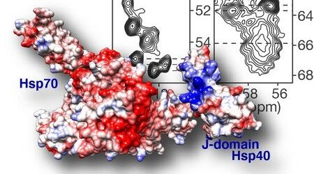 New insight into protein structures that could treat Huntington's disease