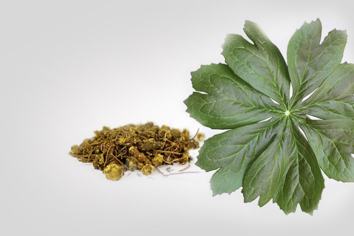 Use of goldenseal may compromise glucose control in diabetics on metformin
