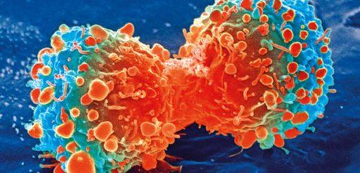 Bespoke neuroblastoma therapy weaponizes cell metabolism