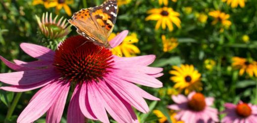 What To Plant In Your Garden To Attract Butterflies