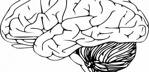 International team identifies genetic link between face and brain shape