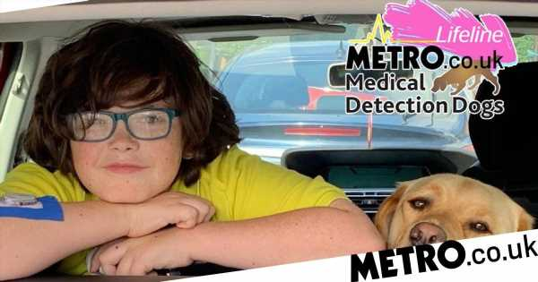 Having a medical detection dog has given me and my son our lives back