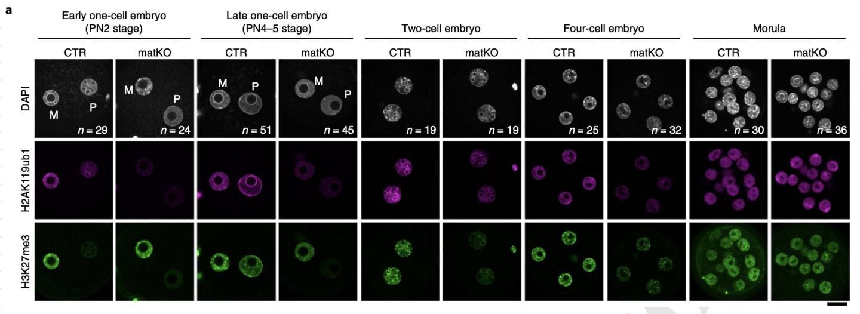 Inheriting acquired traits requires trailblazer modifications to unfertilized eggs