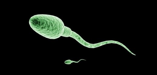 Declining Sperm Count Tied to Chemicals in the Environment