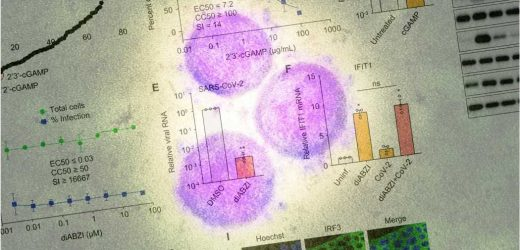 STING agonist diABZI shows promise against SARS-CoV-2 variants