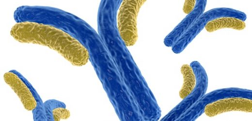 Antibody treatment reactivates the immune defense in patients with advanced-stage cancer