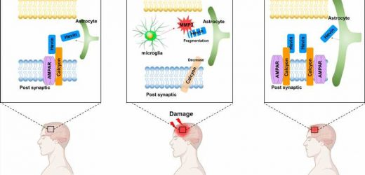 Novel interactions between proteins that help in recovering from brain injury