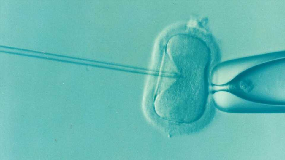 Previous infection with COVID-19 does not affect the chance of success in IVF
