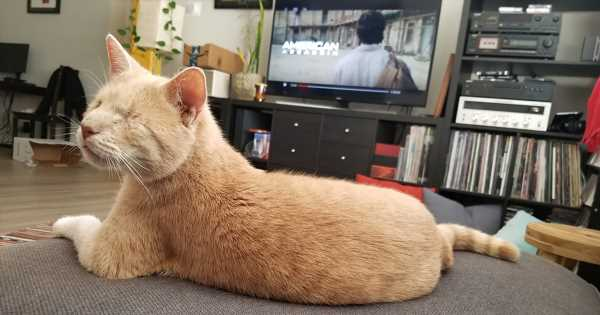 Six-Year-Old Cat Charlie Proves That Love Is Blind