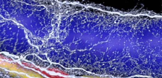3D imaging reveals neural vicious cycle in fatty liver disease