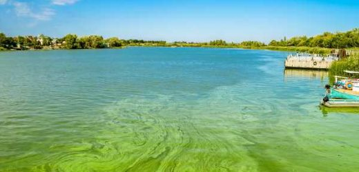 BEWARE: Signs and Symptoms of Blue-Green Algae Intoxication