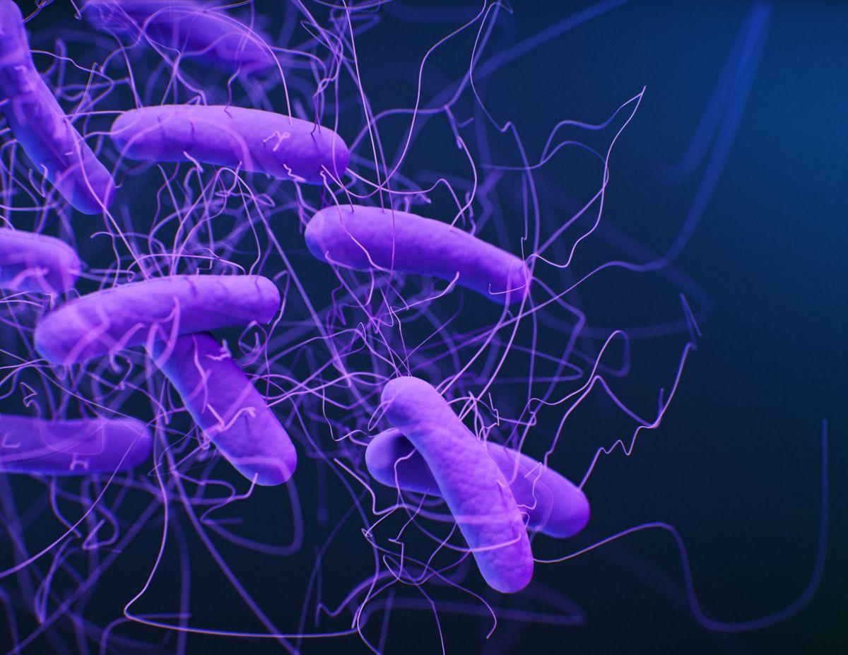 Could poop transplants help treat COVID-19?