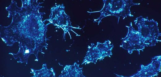 Researchers discover how cancer cells that spread to lymph nodes avoid immune destruction