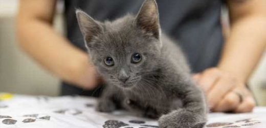 How Fostering Made a Difference for One Special Needs Kitten