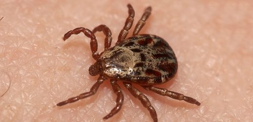 Lyme Disease May Up Risk for Mental Illness, Suicidal Behavior