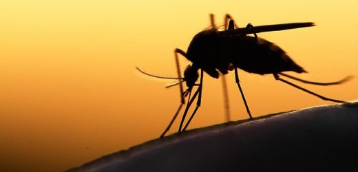 Malaria vaccine combined with other drugs could save millions of lives