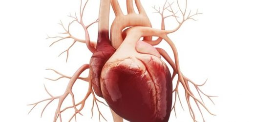 New ESC guidelines for diagnosis and treatment of heart failure published