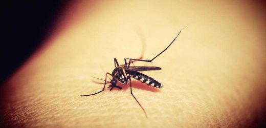 The antibody with a secret: Scientists uncover IgA antibodies ability to fight malaria