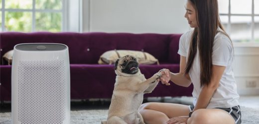 Are air purifiers safe for pets?