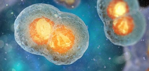 Temperature variations could have driven the division of protocells
